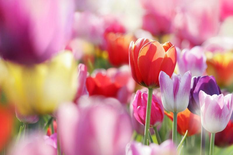Цветы тюльпаны в вазе