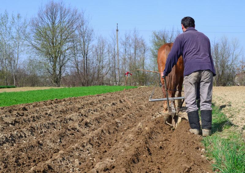 Самый важный этап. 5 способов посадки картофеля