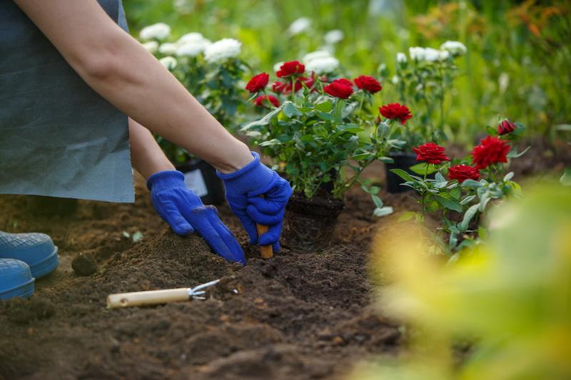 Основы планировки розария в саду
