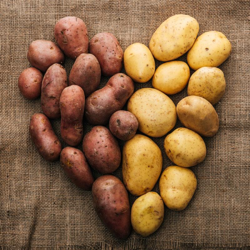 Выращивание картофеля по технологии Квартальновой — 10 кг / кв. м²