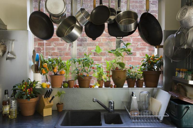 6 лучших растений для выращивания на кухне и критерии выбора культур для этого непростого помещения