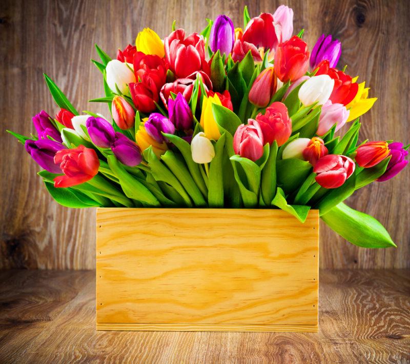 Способы длительного сохранения срезанных тюльпанов в домашних условиях