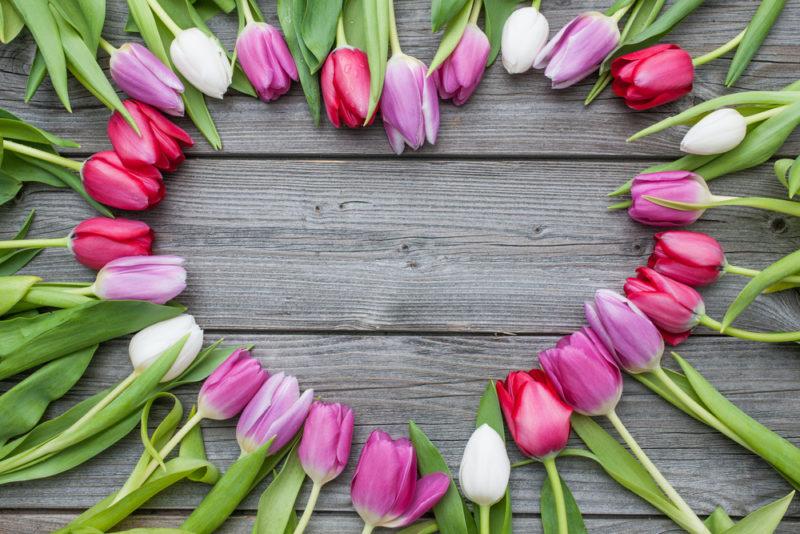 Правила ухода за тюльпанами после цветения