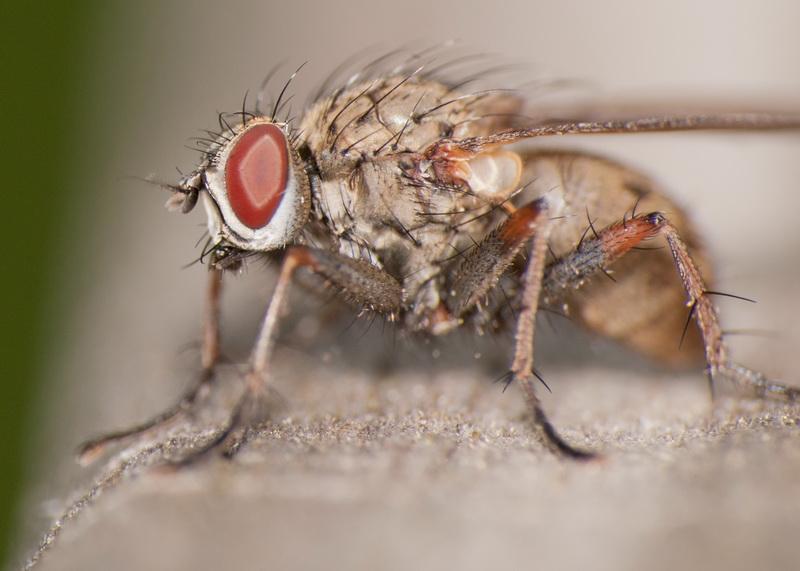 Топ-7 наиболее опасных вредителей лука