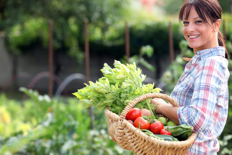 Делимся опытом — лучшие хитрости для начинающих дачников от опытных садоводов