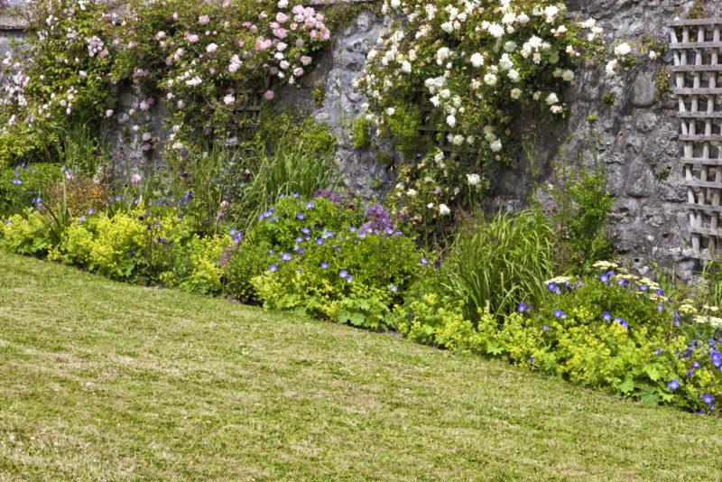 Секреты успешного выращивания плетистой розы