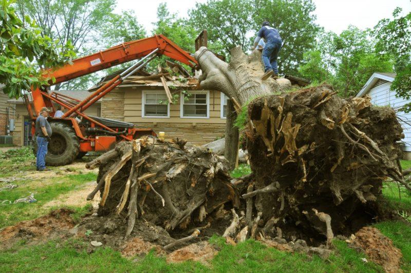 Зачем и когда требуется выкорчевывать деревья на участке