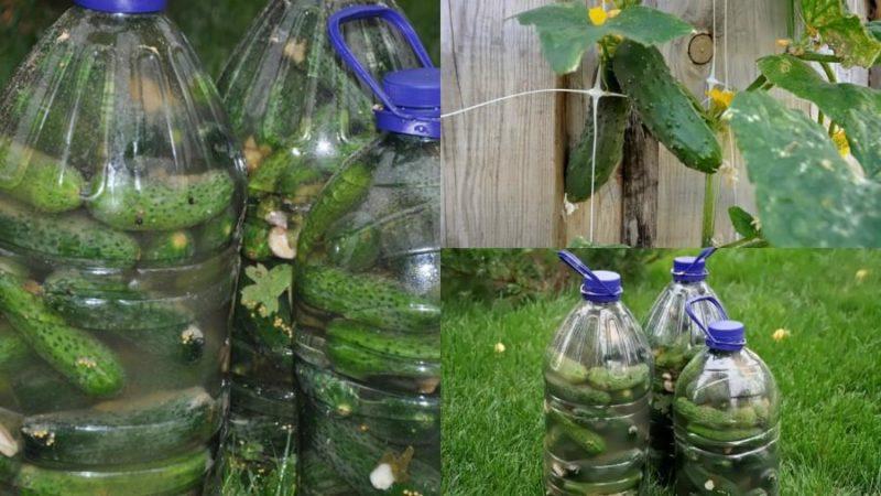Делаем грядку из бутылки. Выращиваем огурцы в 5 литровых бутылках