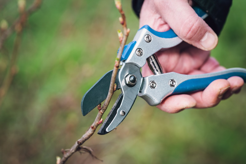 Как самостоятельно и правильно обрезать побеги с деревьев и кустарников