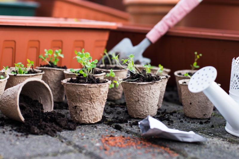 Не грусти — все будет расти! Как и чем правильно подкармливать рассаду