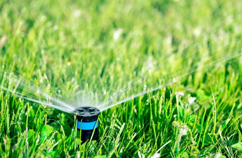Основные правила ухода за газоном и советы опытных садоводов: подкормка, стрижка, полив