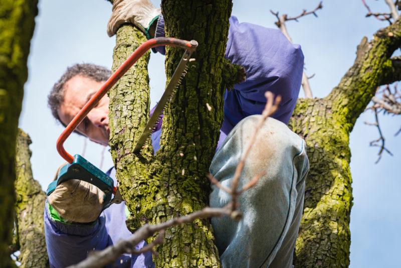 Как правильно спилить дерево — пошаговая инструкция