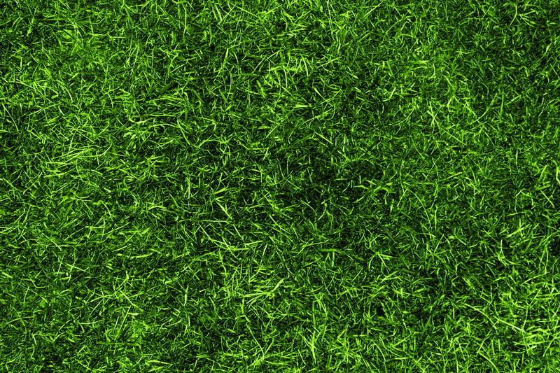 Причины появления мха на газонах и как с этим бороться