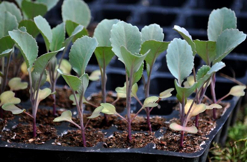 Выращивание рассады дома: основные правила и рекомендации