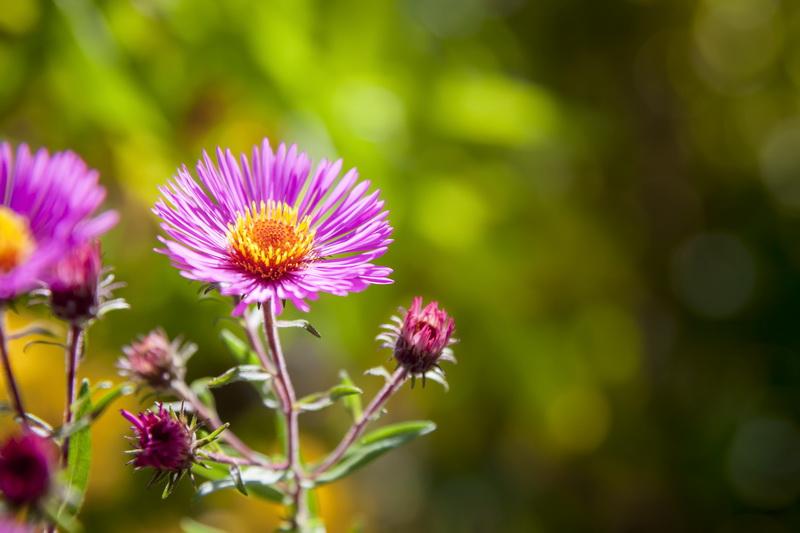 Красивые и полезные растения для приствольных кругов
