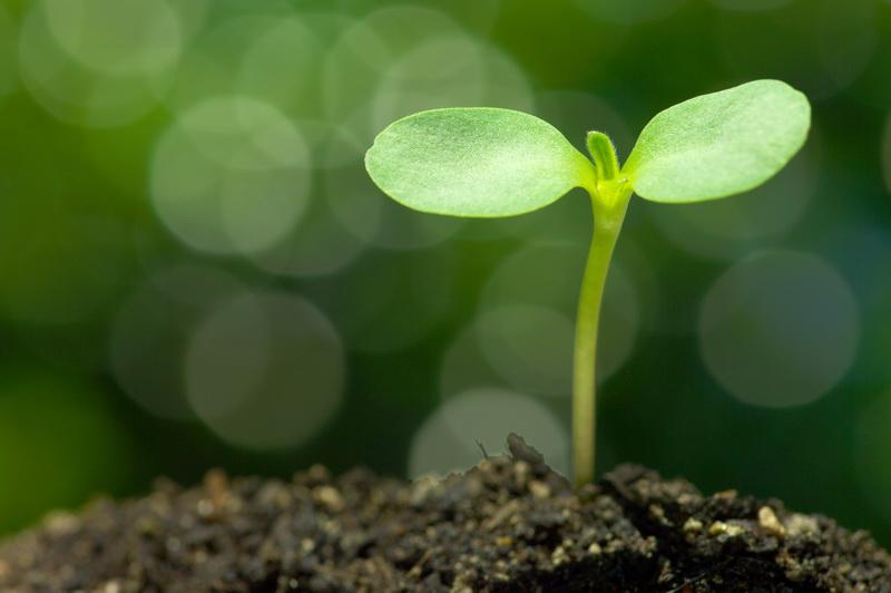 Как правильно вырастить рассаду: ошибки, рекомендации, способы