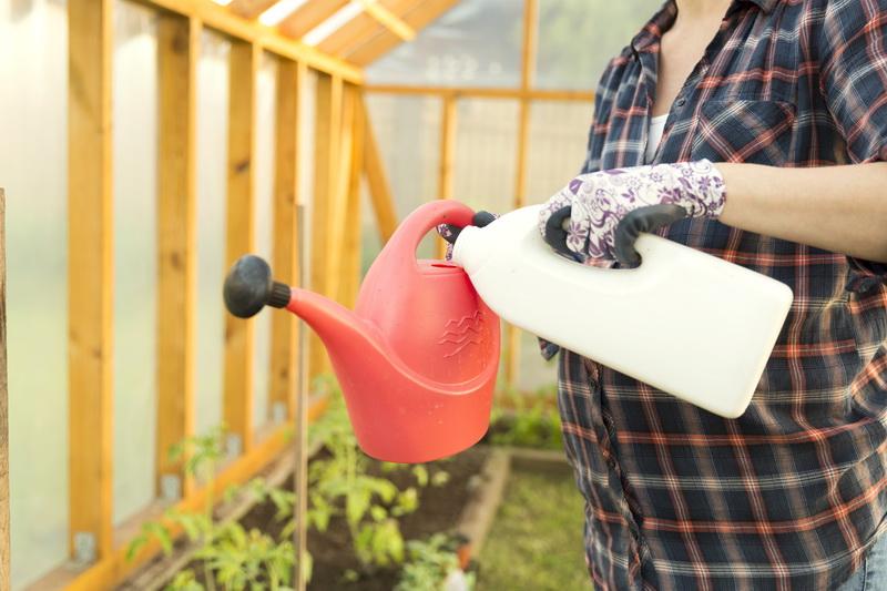 Правильная подкормка томатов — залог будущего урожая