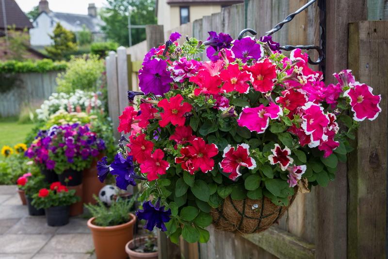 Посадите эти шикарные растения в своем саду — красота и благоухание гарантированы