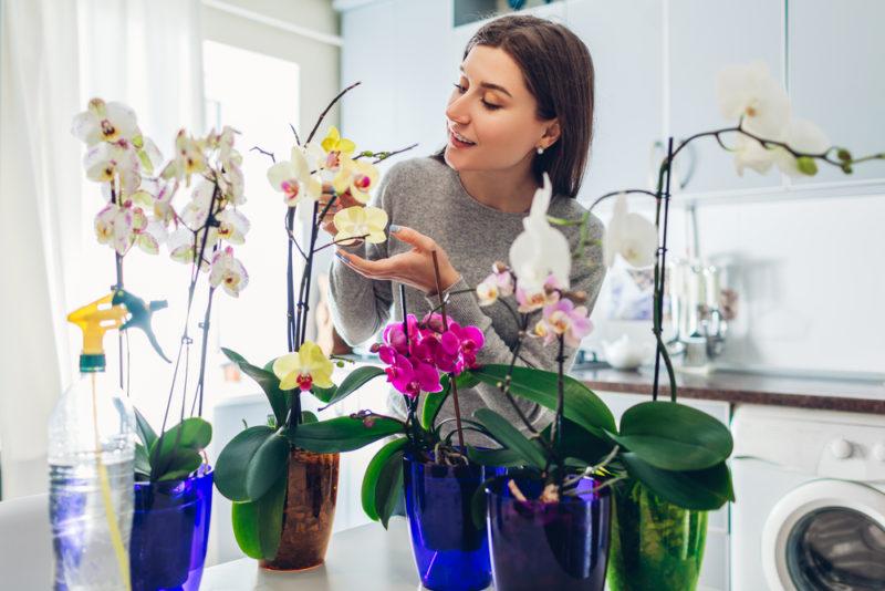 Почему у орхидеи вылезают корни из горшка