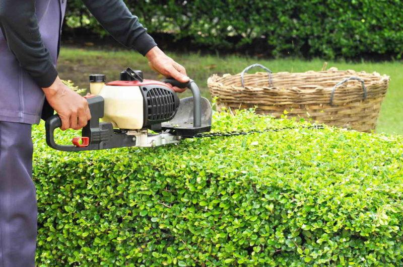 10 работ в саду, которые стоит перепоручить опытному профессиональному садовнику — когда экономия себе во вред