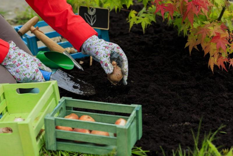 Как вырастить лук из семян: простой и проверенный способ