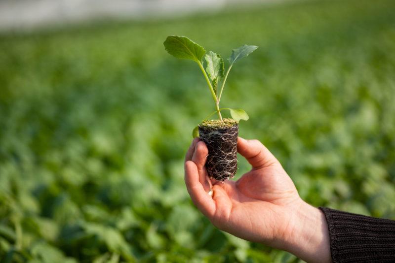 Как развить корневую систему у рассады