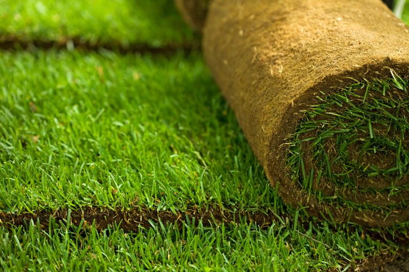Как добиться красивого газона: основные весенние работы