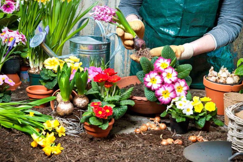 Как сделать из обычного участка шикарный сад