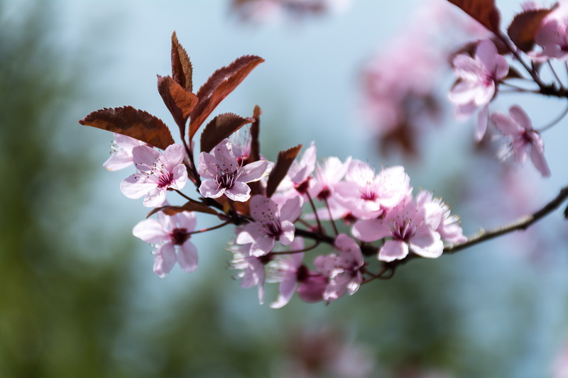 Причины опадения завязей у растений и методы борьбы с этой проблемой