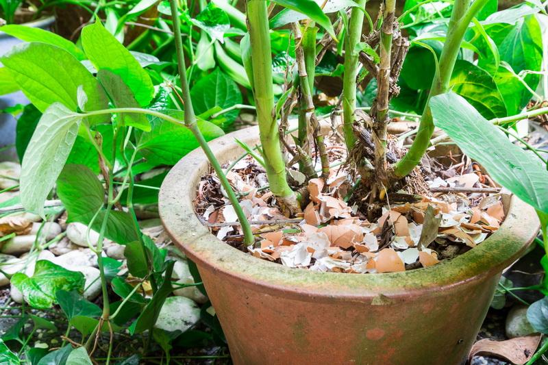 Яичная скорлупа для вашего огорода