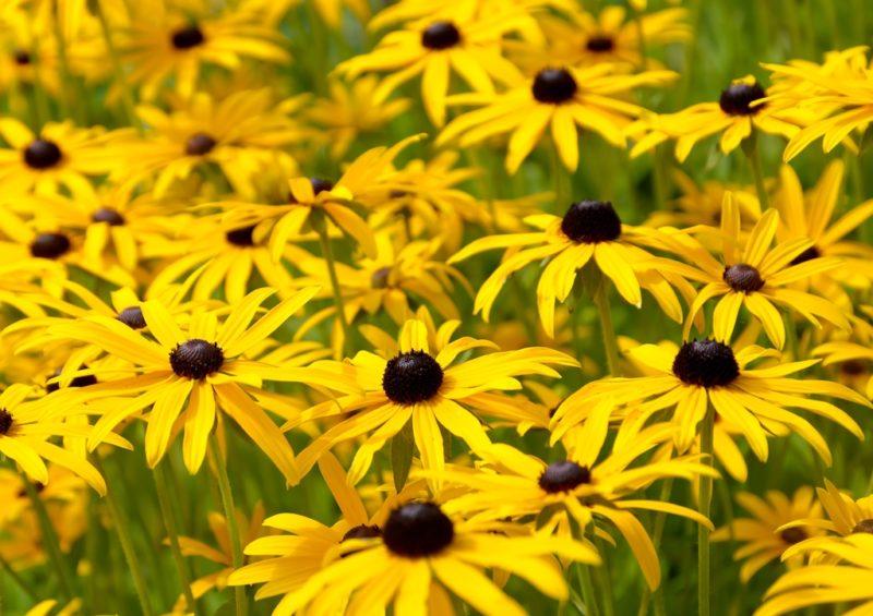 Цветы для затененного участка: что посадить там, где мало солнца?