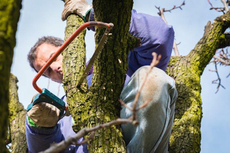 Дачные споры — тень от соседских деревьев. Что делать, если она вам мешает