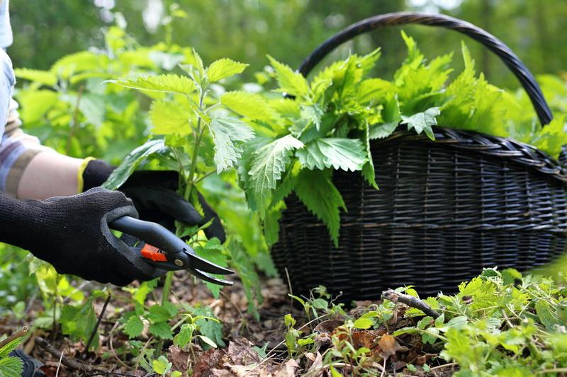 Хлебная подкормка огурцов и помидоров
