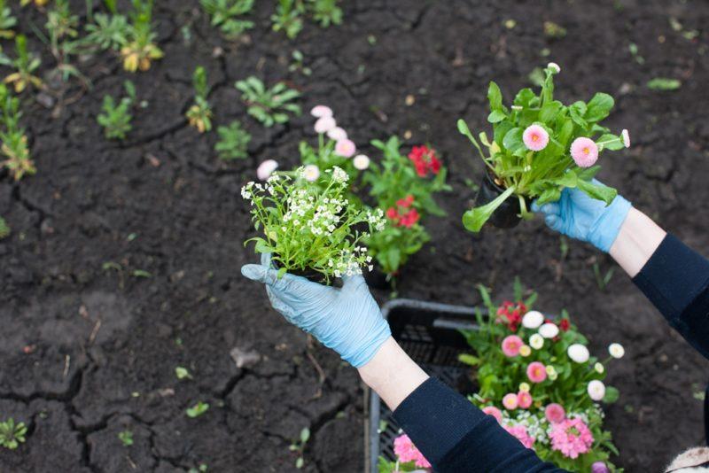 Украшаем участок: несколько решений для оформления цветника