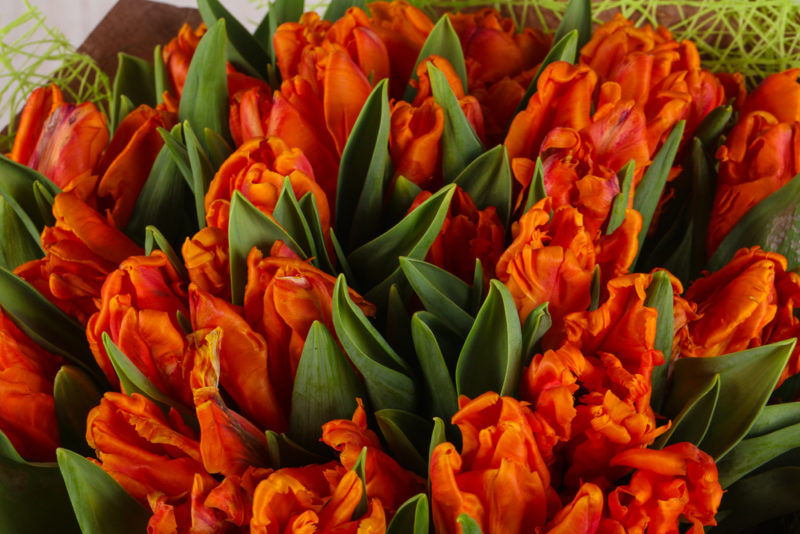 Правила ухода за тюльпанами после цветения: обрезка, уборка на хранение