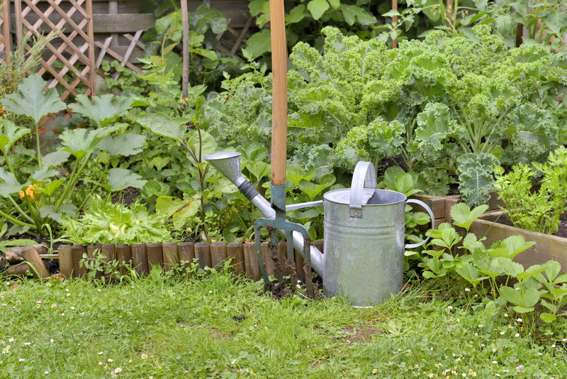 Техника выращивания кабачков. Правила посадки и ухода
