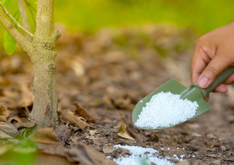 Оптимальное удобрение для садового участка — суперфосфат