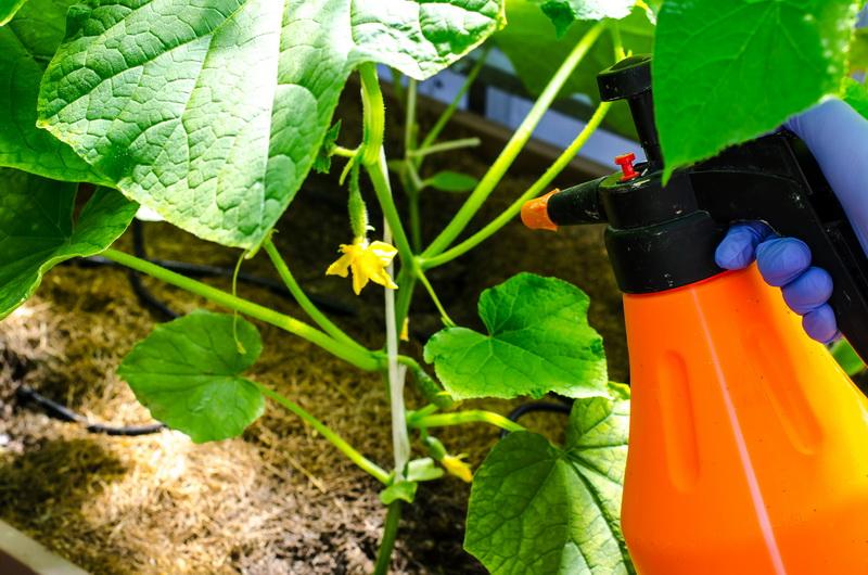 Желтеют листья у огурцов — как бороться?