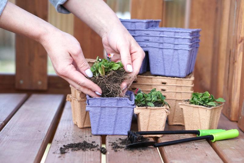 Еще апрель, а рассаду пора сажать: для каких растений это подходит