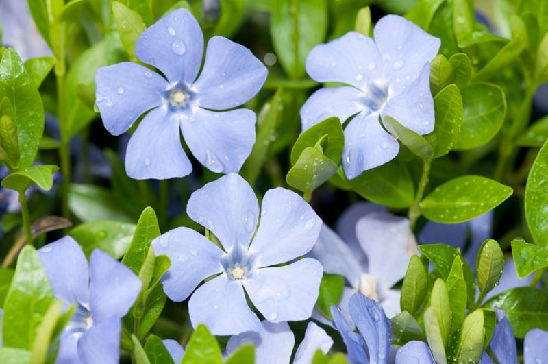 Теневыносливые цветы для клумбы и сада