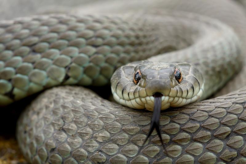 Методы по избавлению от змей на садовом загородном участке