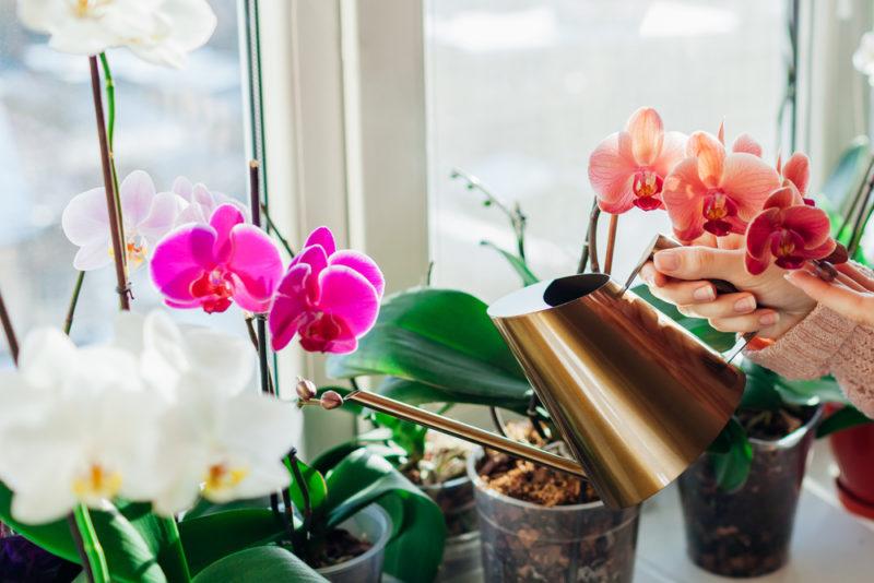 Как заставить орхидею выпустить цветонос в домашних условиях