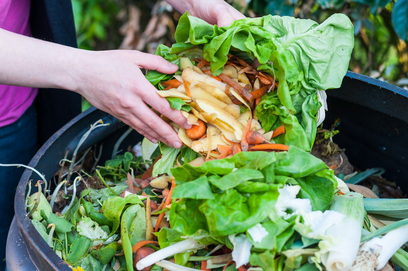 Опасная зимовка: от каких растительных остатков нужно обязательно избавиться еще осенью