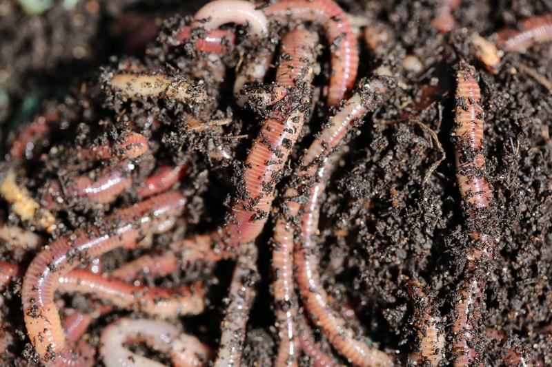 Обитатели компостной кучи