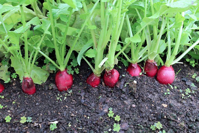 Что можно посадить после капусты