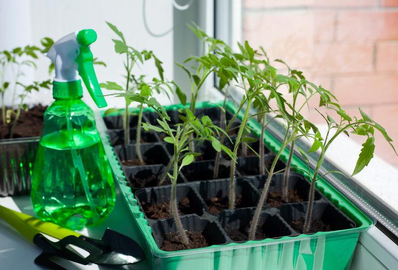 Стимуляция роста томатов и перцев с помощью раствора йода