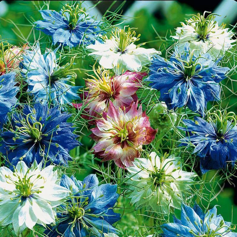 Ароматные растения на грядке — цветник, благоуханием которого можно наслаждаться бесконечно. Выбираем подходящие растения