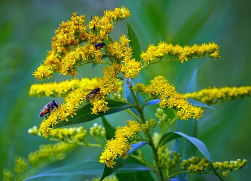 Опасные садовые захватчики и самые эффективные методы борьбы с ними