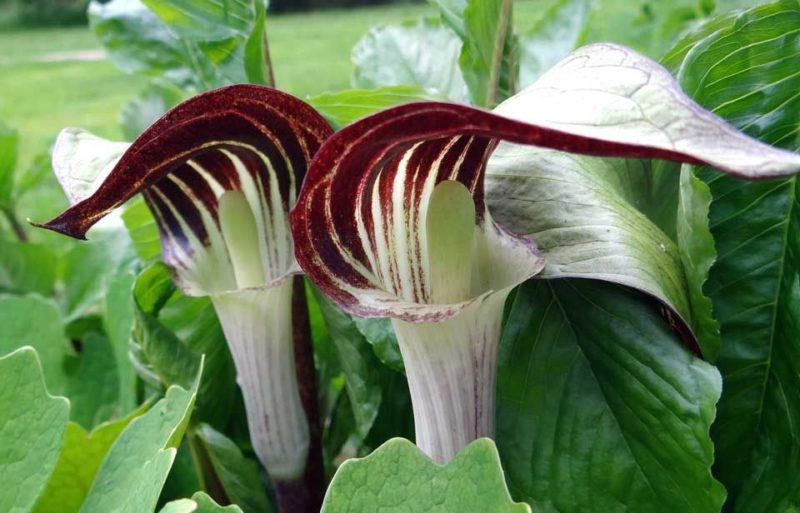 4 экзотических растений для создания уникальной клумбы