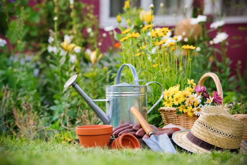 Августовские дела в цветнике, огороде и саду